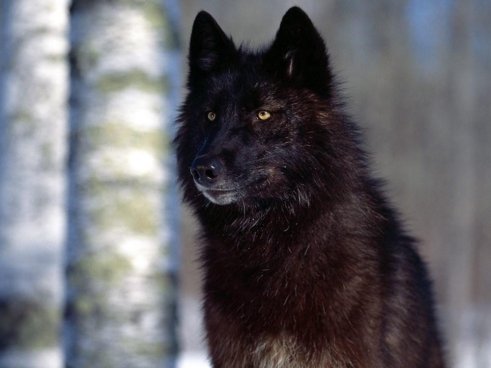 El cura lobo de Casar de Palomero